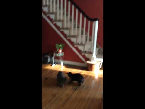 cats climb side of stairs