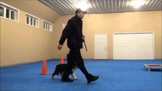 Maggie (Tibetan Terrier) Dog Training Boot Camp Video