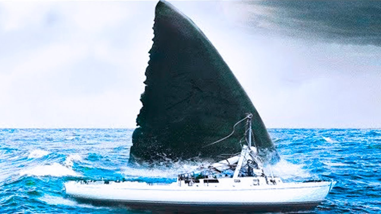 Если Вы Увидите Это В Океане, Немедленно Вылезайте Из Воды