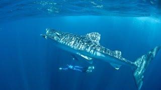 Karol Meyer mergulha nas águas sagradas da Península de Yucatán