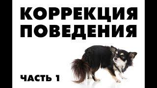 Собака боится людей. Что делать?