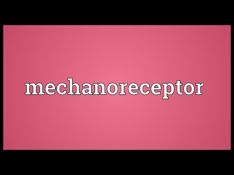 Header of mechanoreceptor