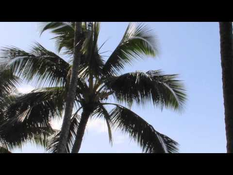 Relaxing Sounds and Sights from Maui