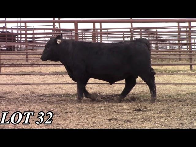 Mead Angus Farms Lot 32