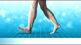 How we walk and heel and knee pain