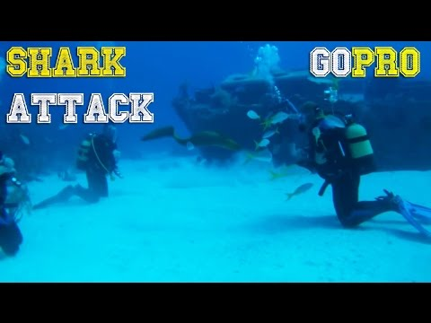 Download Youtube: SHARK ATTACKS and diving fails by GoPro [FailForceOne]