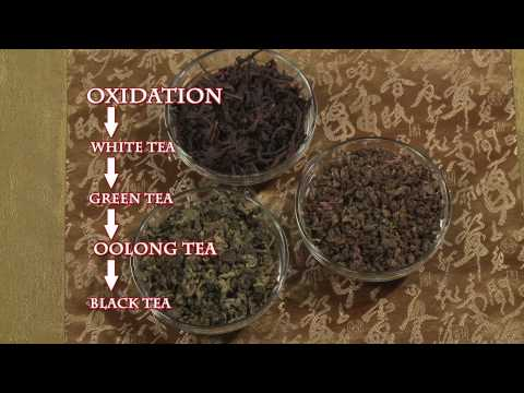 Mr. Tea (Fights Cancer & Other Illnesses)