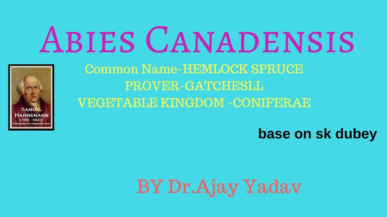 Abies Canadensis Youtube
