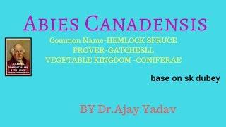 Abies Canadensis Medicamento Homeopático Homeópata Raymundo