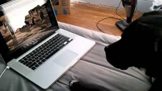 Duke watches Meerkat Manor on Youtube.