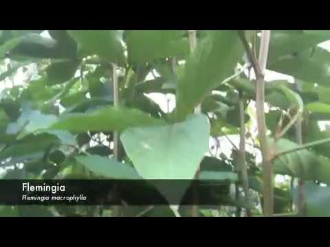 mulberry leaf polyculture