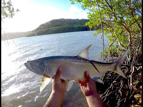 Shore Fishing Tarpon, Antigua