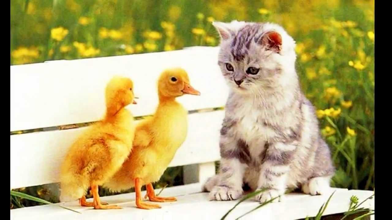 ღ ⊱╮ Spring salute with cute animals ⊱╮ღ - YouTube