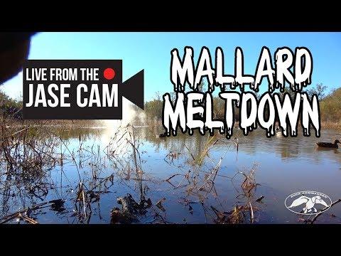 Duck Commander Mallard Meltdown