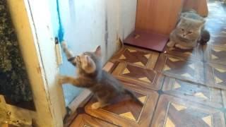 Хорошие котята попадают в хорошие руки ( Добрый котенок )
