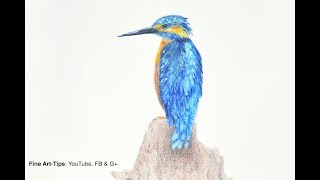 How to Draw a Kingfisher With Aquarelle Pencils