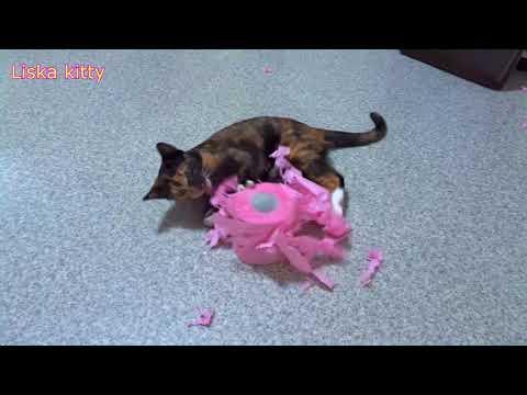 Котята и туалетная бумага:))) Смешное видео, видео прикол:)