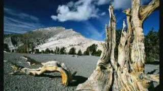 Earth Tribe TV - Meet These Old Living Things