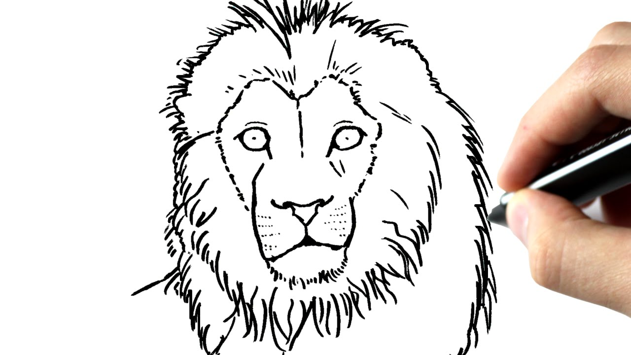 Comment Dessiner Un Lion Youtube