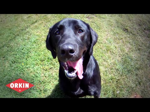 Canine Inspection | Orkin Bed Bug Control