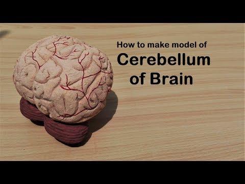 How to make Brain Cerebellum Model |3d thermocol/Styrofoam carving