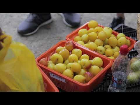 Festival de las frutas y los dulces de carnaval