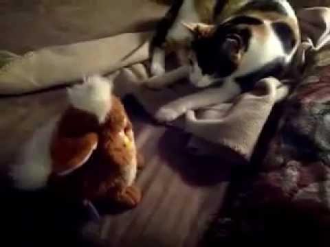 Cat Meets Furby