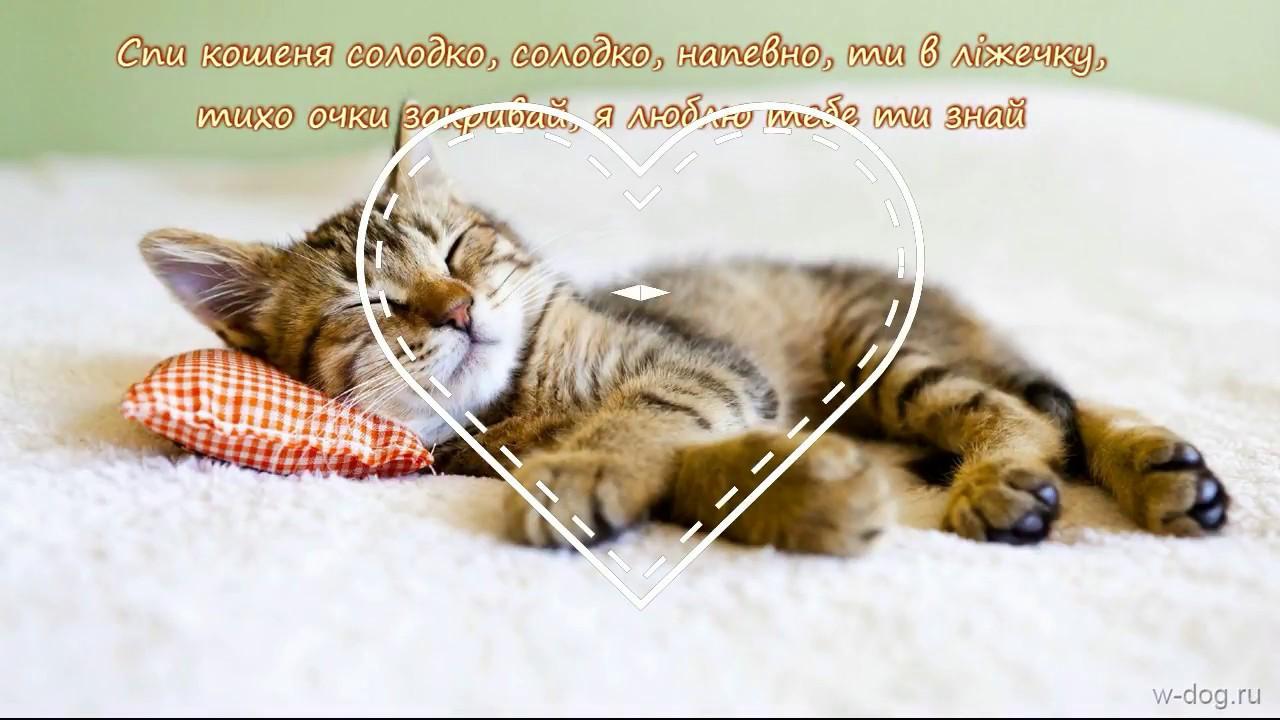 солодких снів картинки