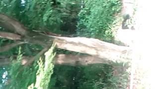 並木林の一本に、片方が、おされて、かけのぼっていった。一瞬烏が激突...