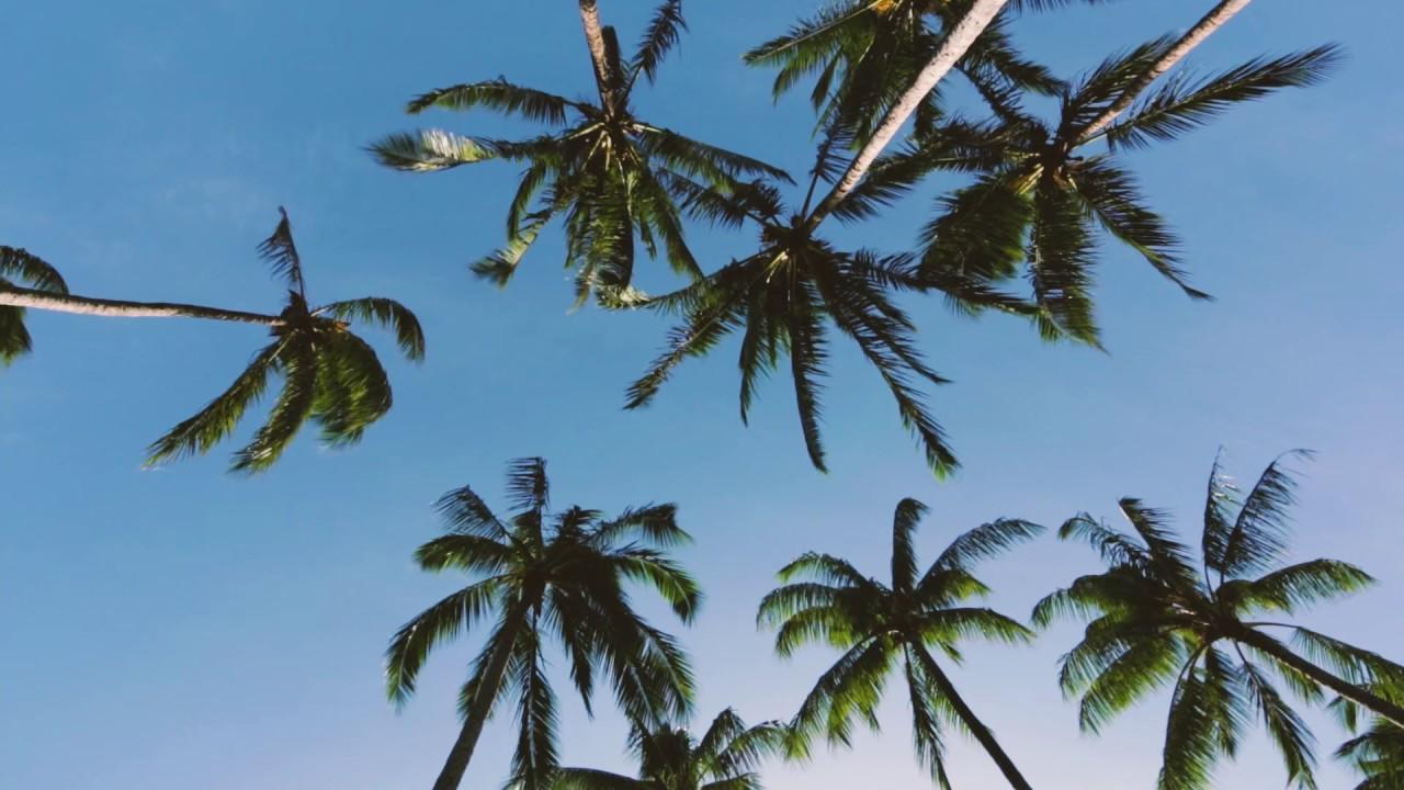 Swinging palm trees no sound a 8 minute screensaver youtube - Free palm tree screensavers ...