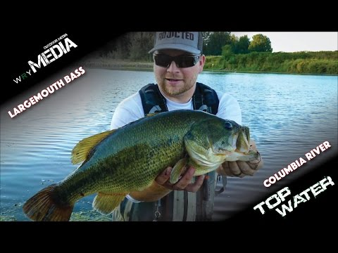 Huge Top Water Largemouth on the Columbia River