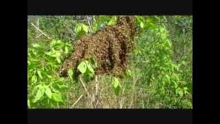 How Bee