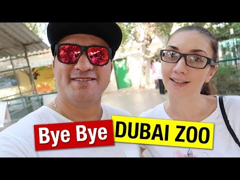 Last Day Of Dubai Zoo | Dubai Zoo Move To Dubai Safari Zoo Park | Dubai Vlogger
