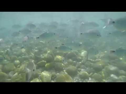 GOPR0164 Sicilia 2016 pesci 02