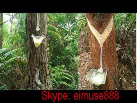 Gum Rosin Ww Grade Indonesia Glycerol Ester Of Gum Rosin