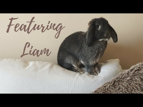 BEFORE YOU ADOPT A RABBIT WATCH THIS