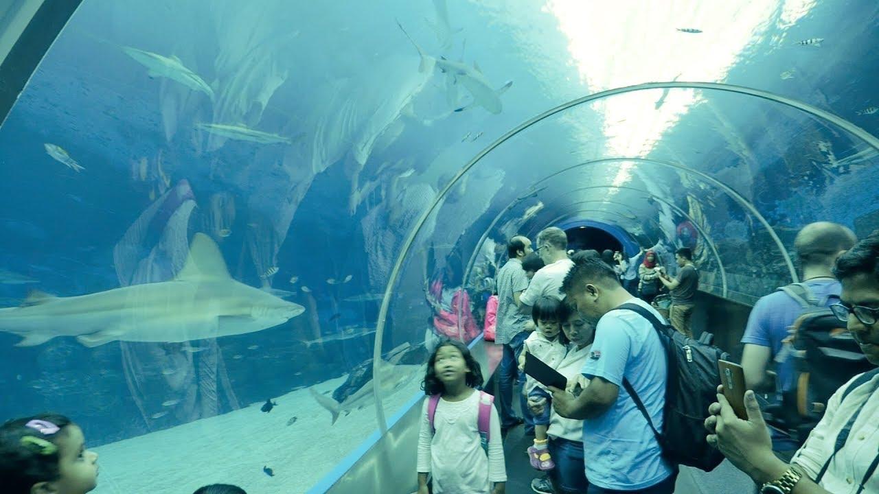 Shark Tank Tunnel In Marina Life Parksea Aquarium Singapore