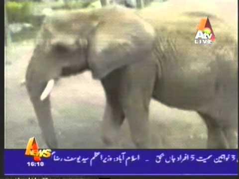 Bahawalpur Zoo packag Fresh.