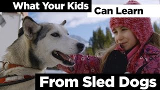 What Your Kids Can Learn From Sled Dogs