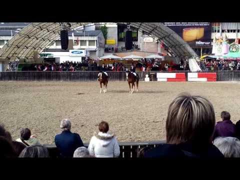 Pferdezuchtgenossenschaft Falkenstein, Olma 12.10.2013, Bild 1-3 von 8, Freiberger Quadrille