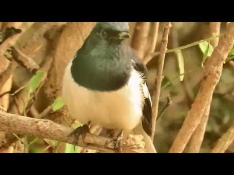 Birding at Keoladeo Ghana National Bird Sanctuary, Bharatpur with Canon SX60 HS