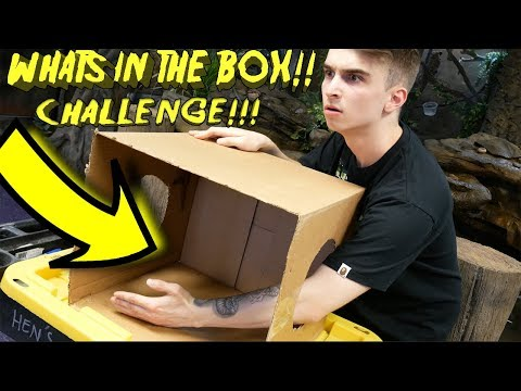 WHAT'S IN THE BOX CHALLENGE!! (LIVE ANIMALS EDITION)