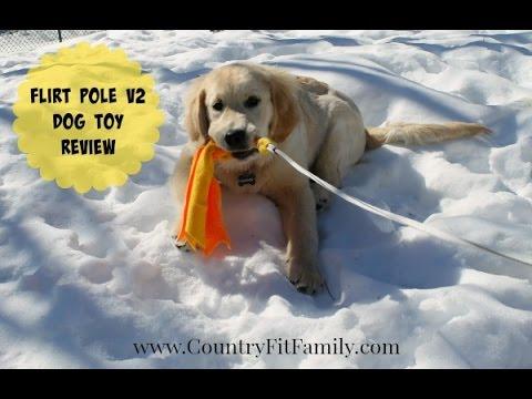 Flirt Pole V2 Dog Toy Demonstration with a Puppy