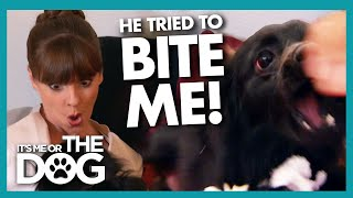 PaperAggressive Dog Tries to Bite Victoria | It's Me or The Dog