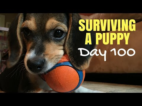 Surviving A Puppy - Day 100