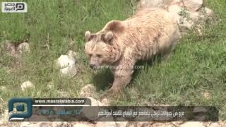 مصر العربية | مروّض حيوانات تركي يتفاهم مع الضباع بتقليد أصواتهم
