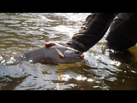 Salmon & Steelhead Fishing Central Oregon | Addicted Life Ep. #13