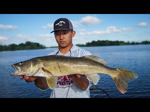 Summer Walleye Catch Clean Cook! (Best Tasting Fish Ever!)