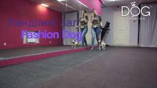 Дрессировка собак в Омске, Xендлинг зал Fashion Dog