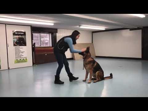 Intermédiaire Tricks Dog Chief   DMWYD